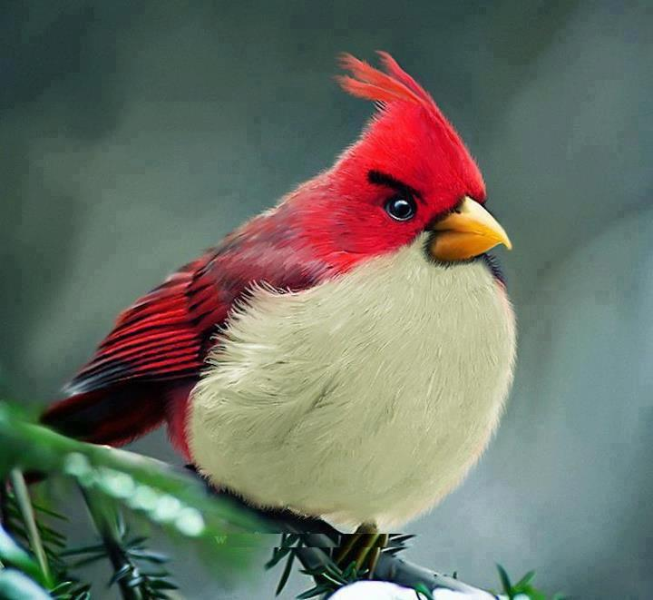 Bird-red