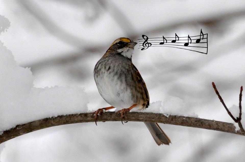 bird-notes-sing