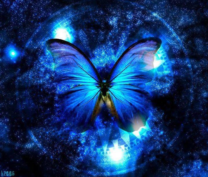 blue butterfly3