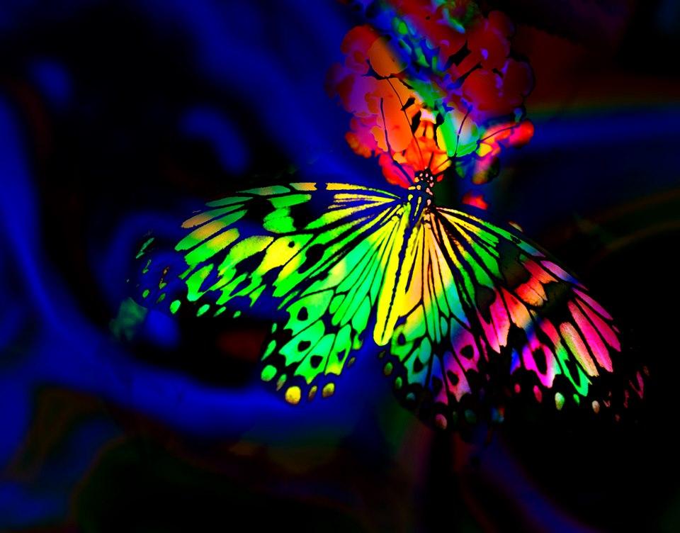 butterfly-multi