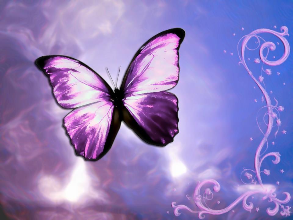 butterfly-violet2