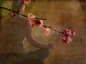 meditation-flowers